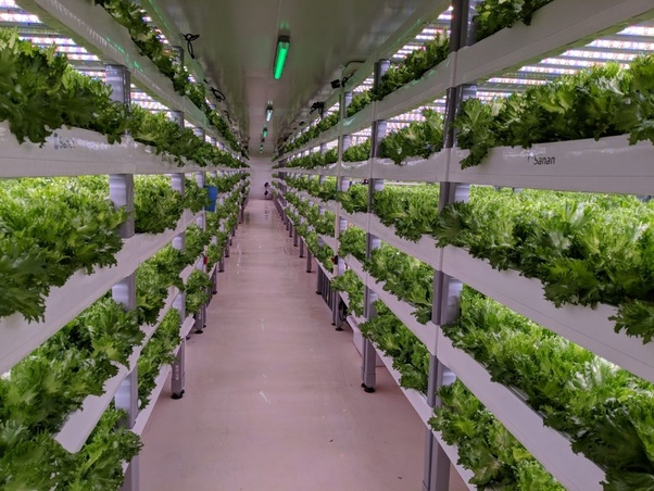 indoor farming 1